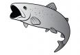 Aufkleber Delphin - Forelle Silber