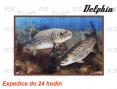 Fußmatte - Forellen 3D